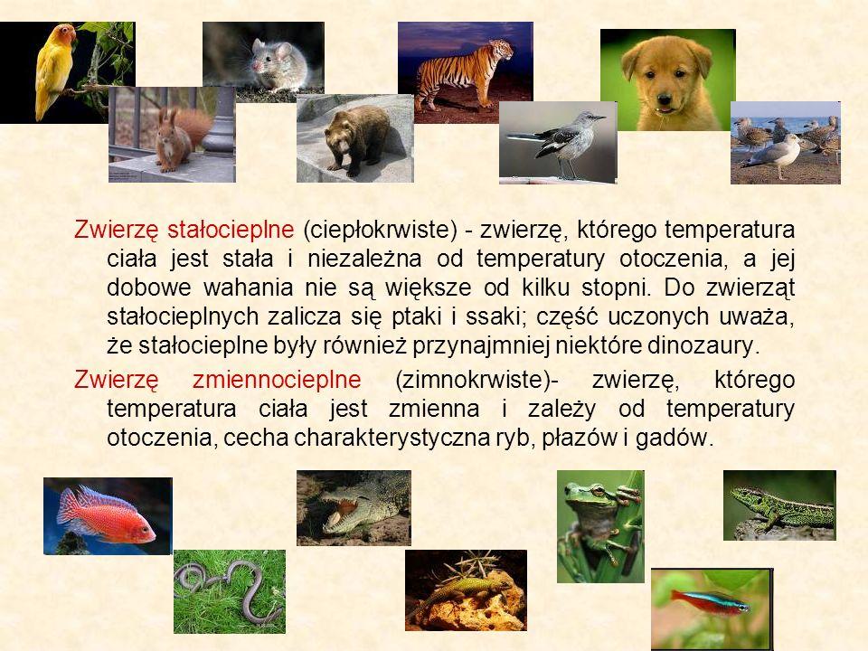 Zwierzę stałocieplne (ciepłokrwiste) - zwierzę, którego temperatura ciała jest stała i niezależna od temperatury otoczenia, a jej dobowe wahania nie są większe od kilku stopni.