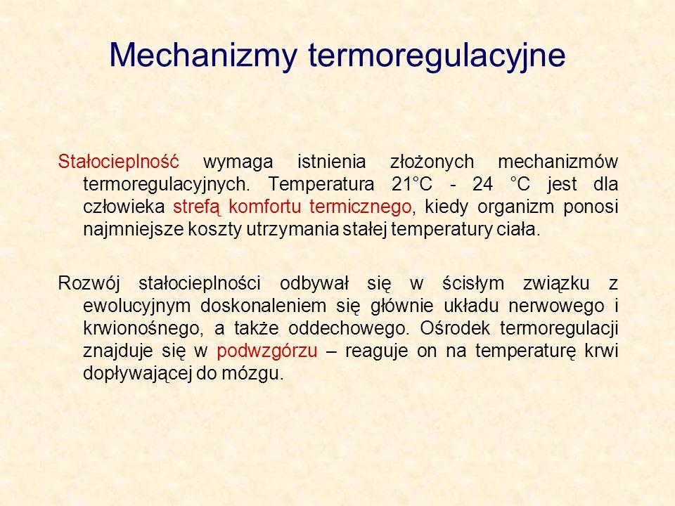 Mechanizmy termoregulacyjne Stałocieplność wymaga istnienia złożonych mechanizmów termoregulacyjnych.