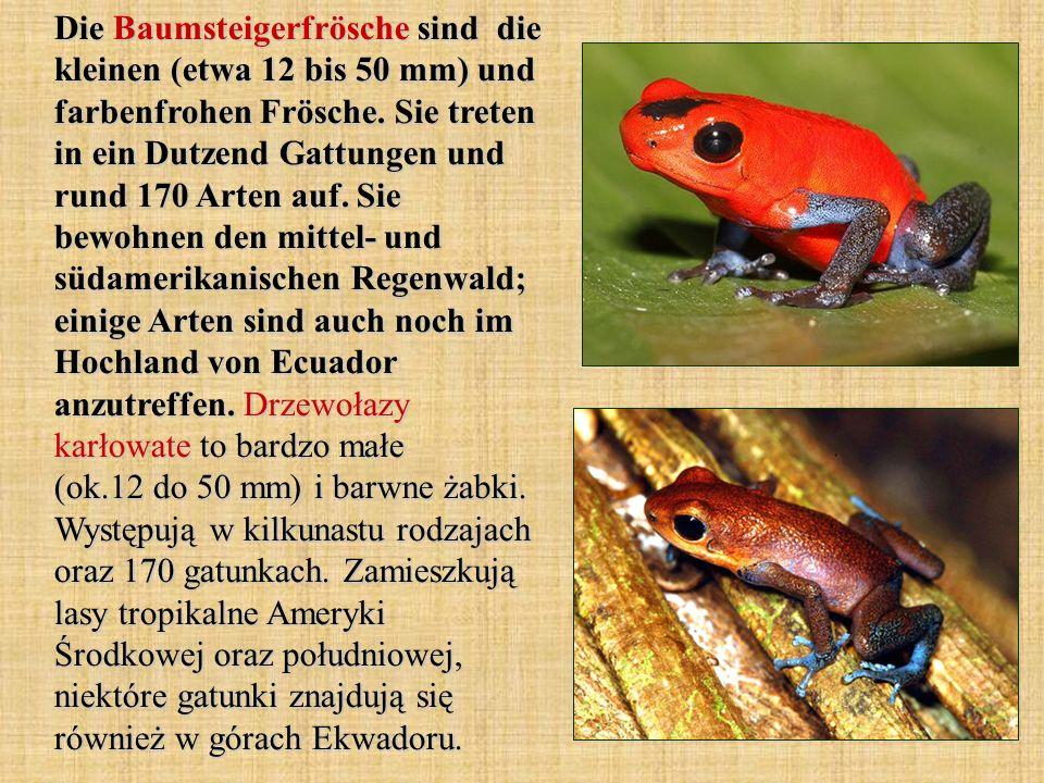 Die Baumsteigerfrösche sind die kleinen (etwa 12 bis 50 mm) und farbenfrohen Frösche. Sie treten in ein Dutzend Gattungen und rund 170 Arten auf. Sie