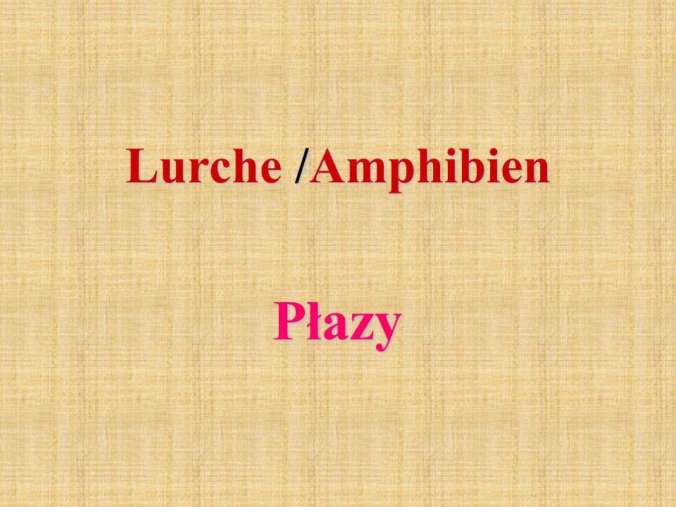 Lurche /Amphibien Płazy