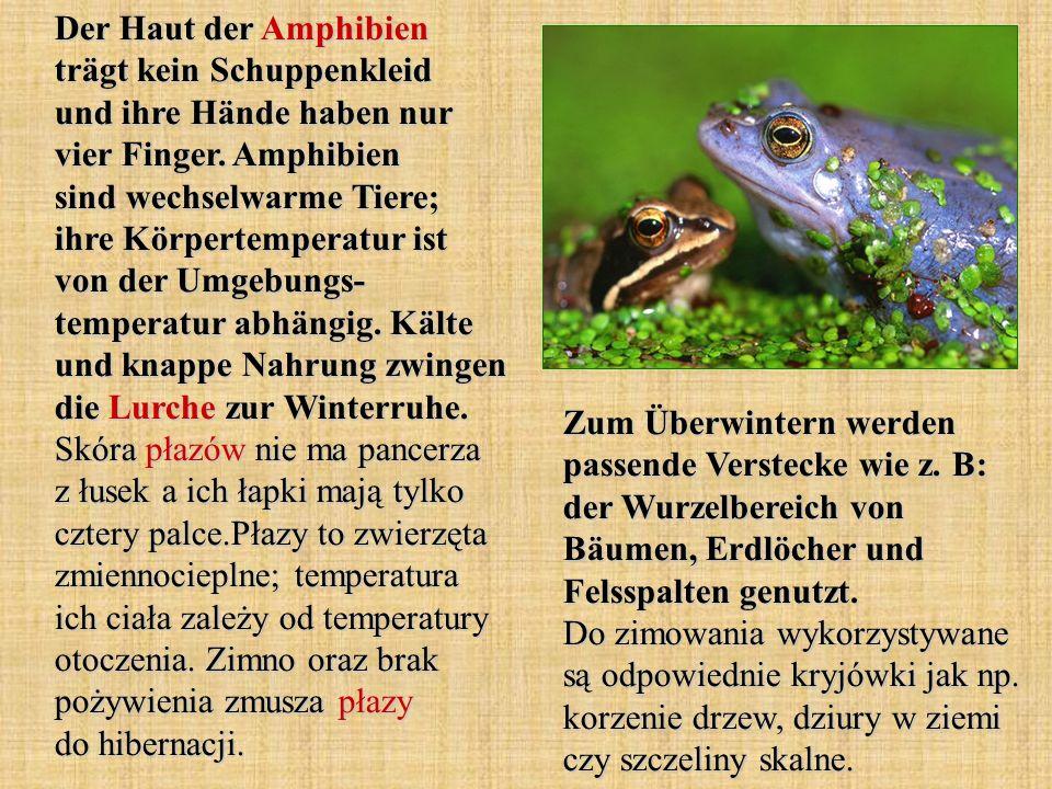 Der Haut der Amphibien trägt kein Schuppenkleid und ihre Hände haben nur vier Finger. Amphibien sind wechselwarme Tiere; ihre Körpertemperatur ist von
