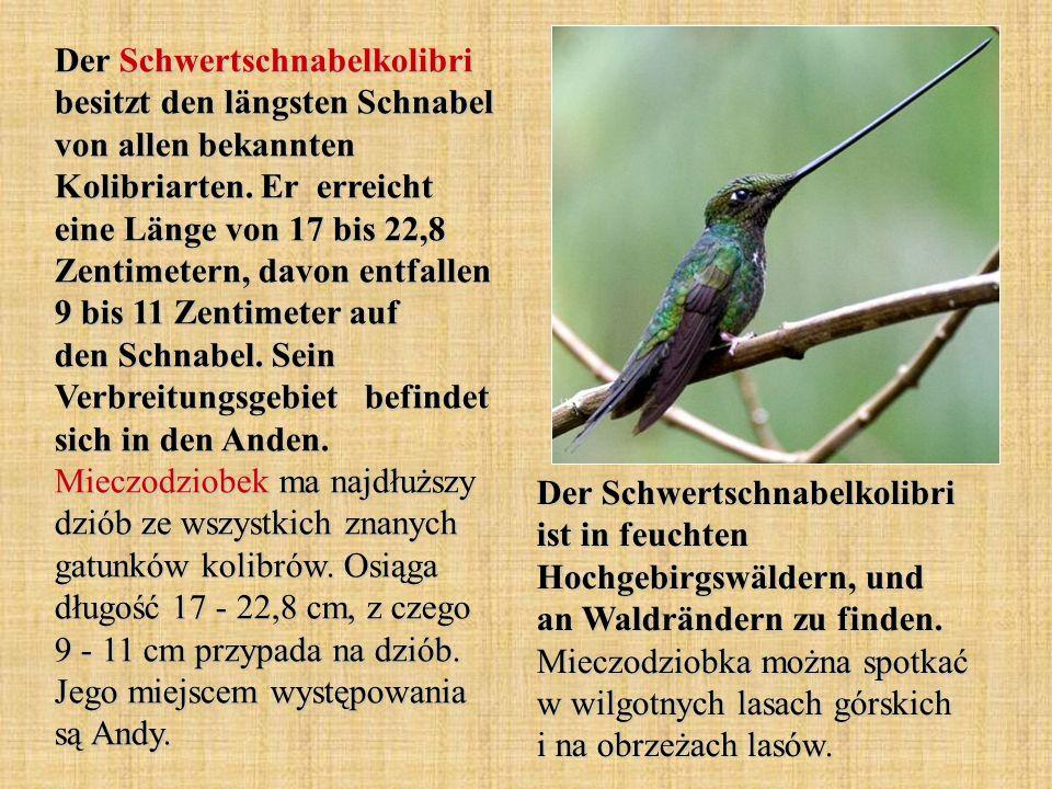 Der Schwertschnabelkolibri besitzt den längsten Schnabel von allen bekannten Kolibriarten. Er erreicht eine Länge von 17 bis 22,8 Zentimetern, davon e