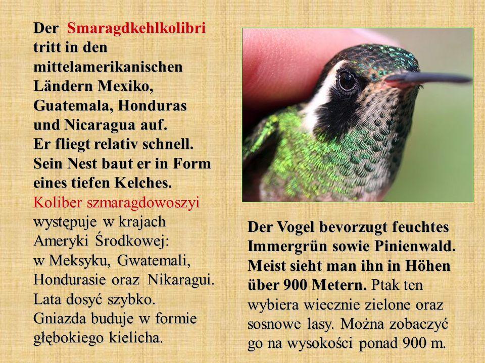Der Smaragdkehlkolibri tritt in den mittelamerikanischen Ländern Mexiko, Guatemala, Honduras und Nicaragua auf. Er fliegt relativ schnell. Sein Nest b