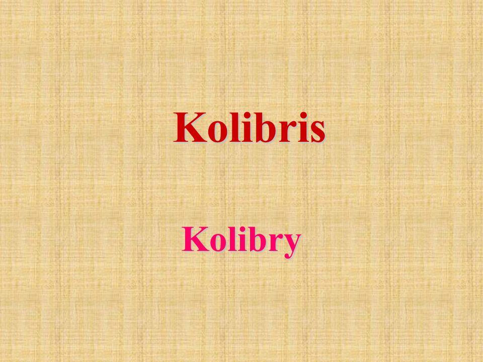 Die Familie der Kolibris umfasst mehr als 100 Gattungen und 330 - 340 Arten.