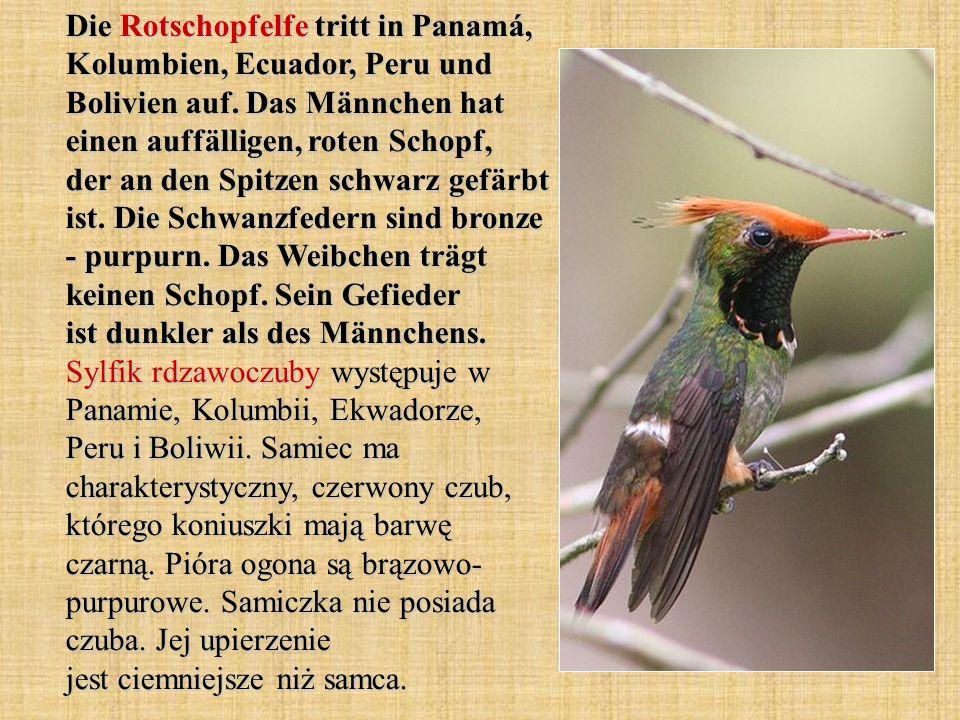 Die Rotschopfelfe tritt in Panamá, Kolumbien, Ecuador, Peru und Bolivien auf. Das Männchen hat einen auffälligen, roten Schopf, der an den Spitzen sch
