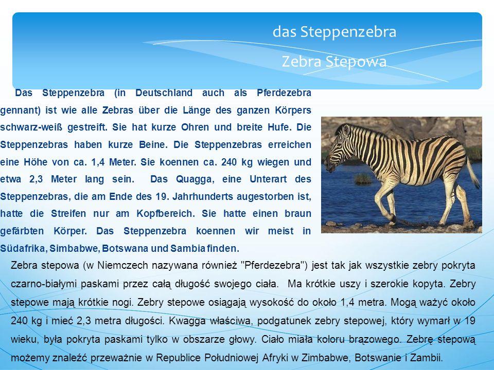 das Steppenzebra Zebra Stepowa Das Steppenzebra (in Deutschland auch als Pferdezebra gennant) ist wie alle Zebras über die Länge des ganzen Körpers schwarz-weiß gestreift.