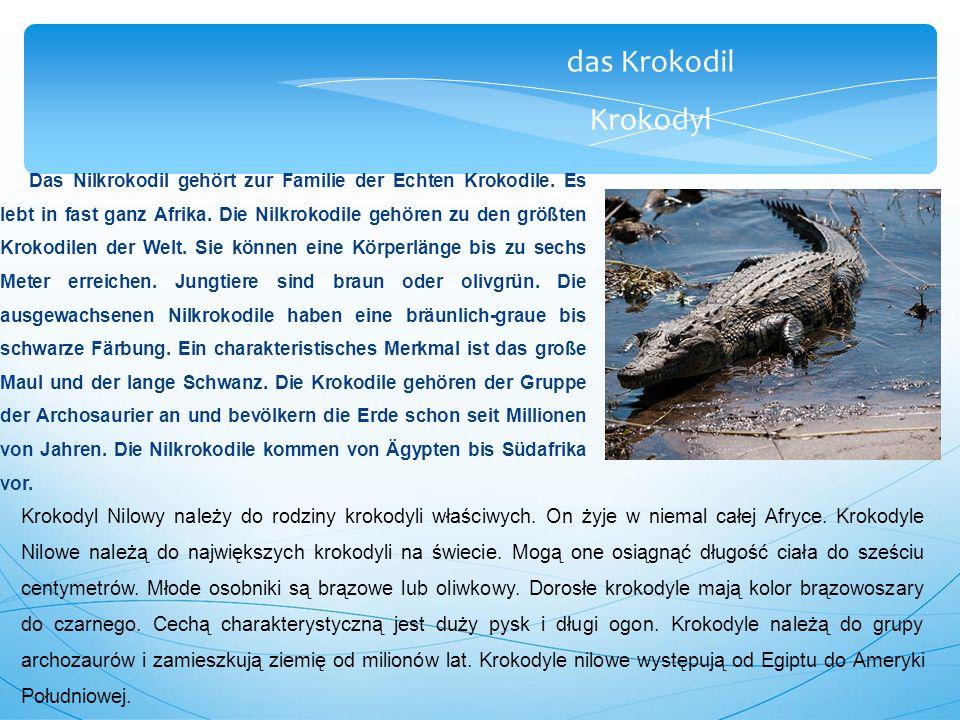 das Krokodil Krokodyl Das Nilkrokodil gehört zur Familie der Echten Krokodile.