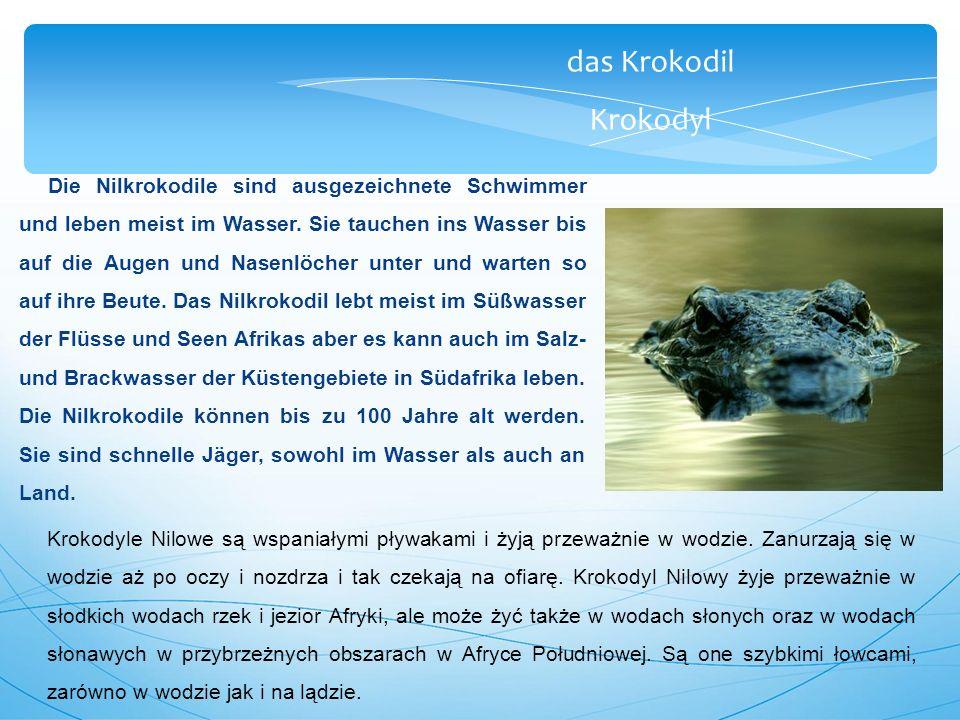 das Krokodil Krokodyl Die Nilkrokodile sind ausgezeichnete Schwimmer und leben meist im Wasser.
