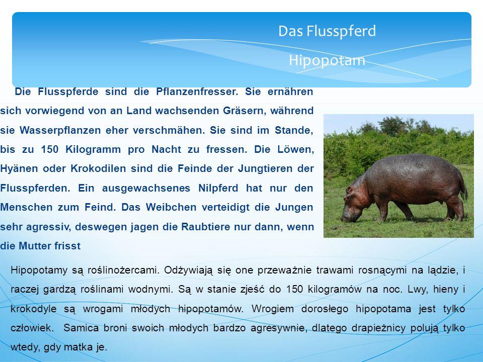 Das Flusspferd Hipopotam Die Flusspferde sind die Pflanzenfresser.