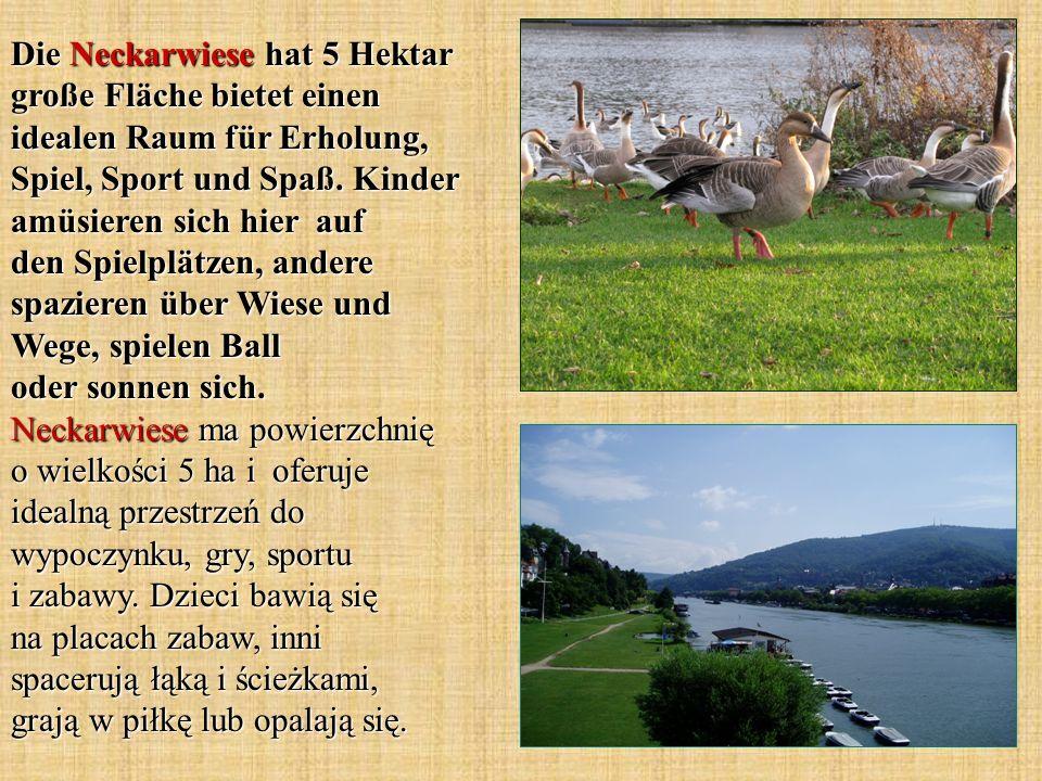 Die Neckarwiese hat 5 Hektar große Fläche bietet einen idealen Raum für Erholung, Spiel, Sport und Spaß.
