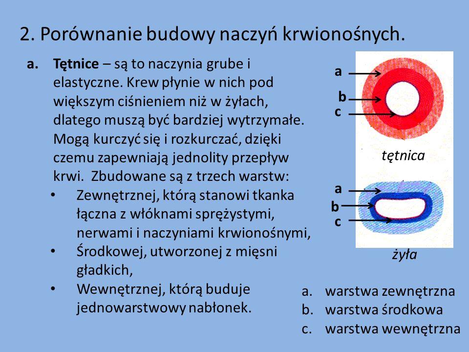 tętnica żyła 2. Porównanie budowy naczyń krwionośnych. a b c a b c a.warstwa zewnętrzna b.warstwa środkowa c.warstwa wewnętrzna a.Tętnice – są to nacz