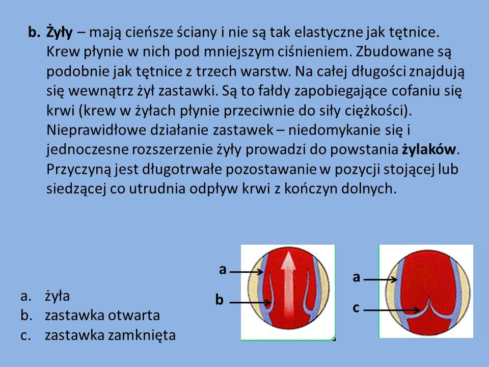 b.Żyły – mają cieńsze ściany i nie są tak elastyczne jak tętnice. Krew płynie w nich pod mniejszym ciśnieniem. Zbudowane są podobnie jak tętnice z trz