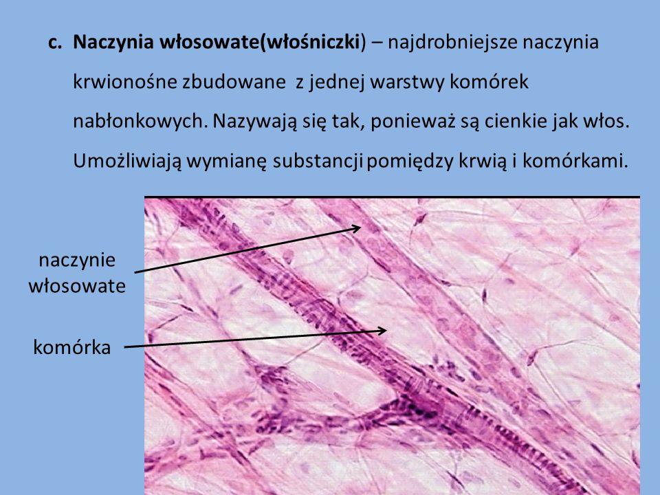 c. Naczynia włosowate(włośniczki) – najdrobniejsze naczynia krwionośne zbudowane z jednej warstwy komórek nabłonkowych. Nazywają się tak, ponieważ są