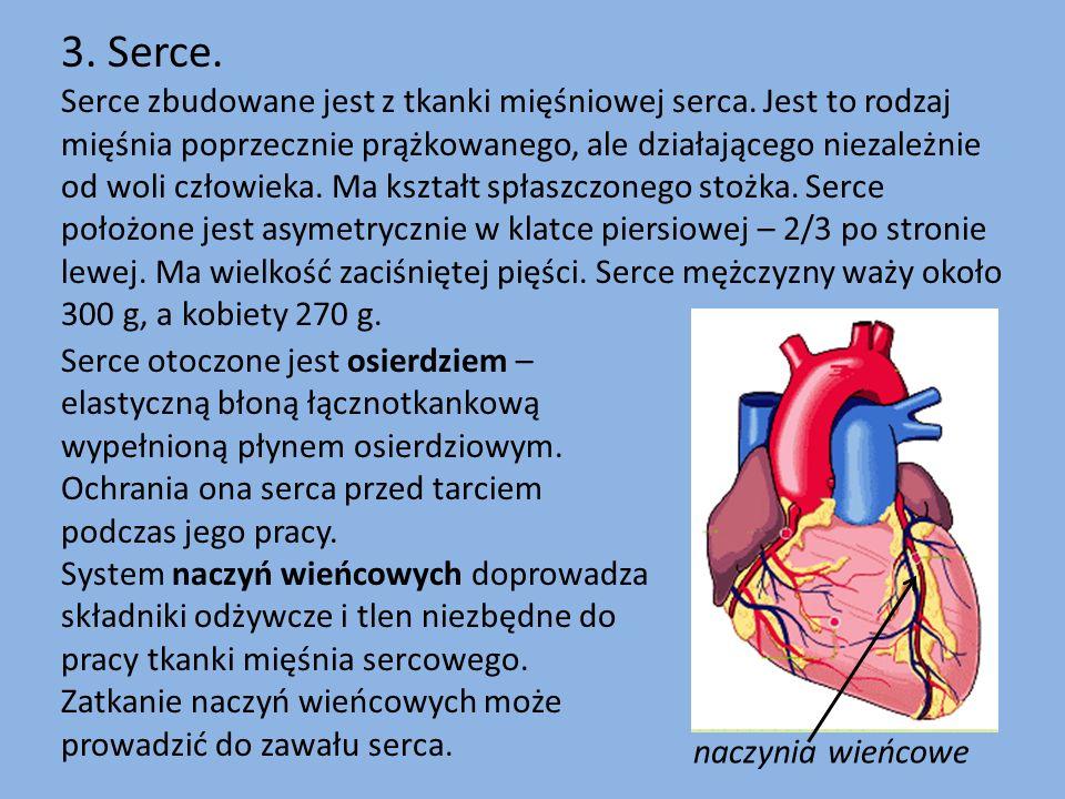 3. Serce. Serce zbudowane jest z tkanki mięśniowej serca. Jest to rodzaj mięśnia poprzecznie prążkowanego, ale działającego niezależnie od woli człowi