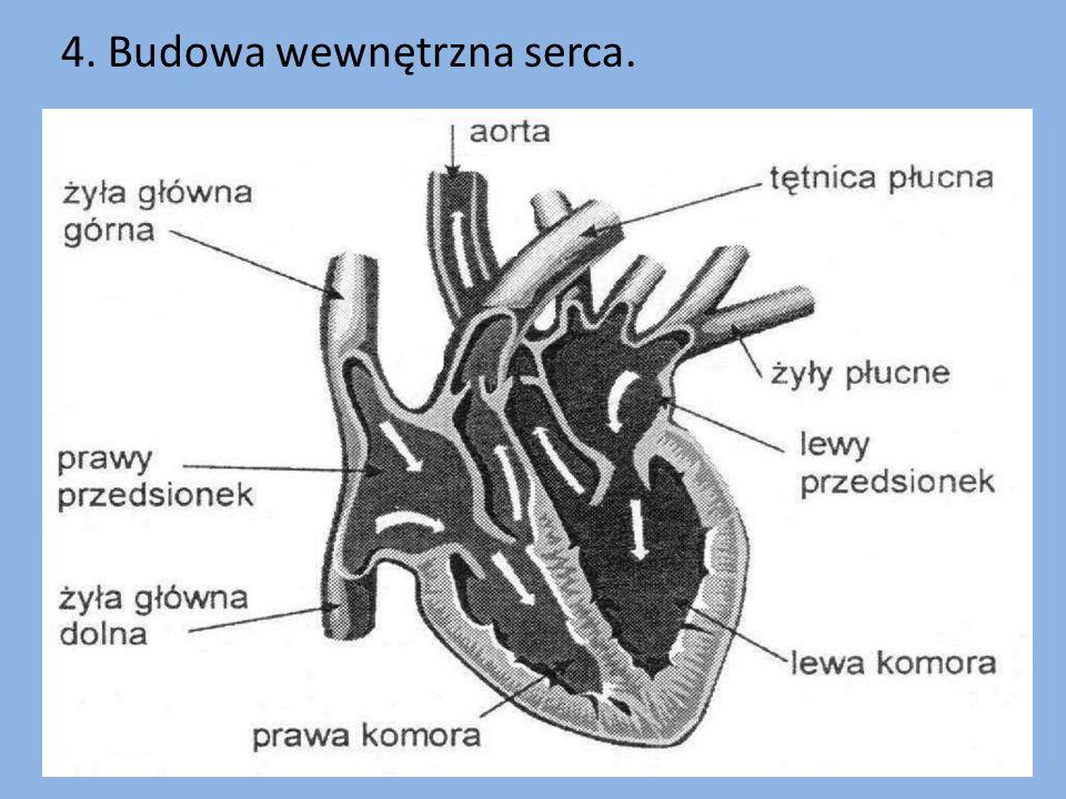 Serce człowieka jest czteroczęściowe.