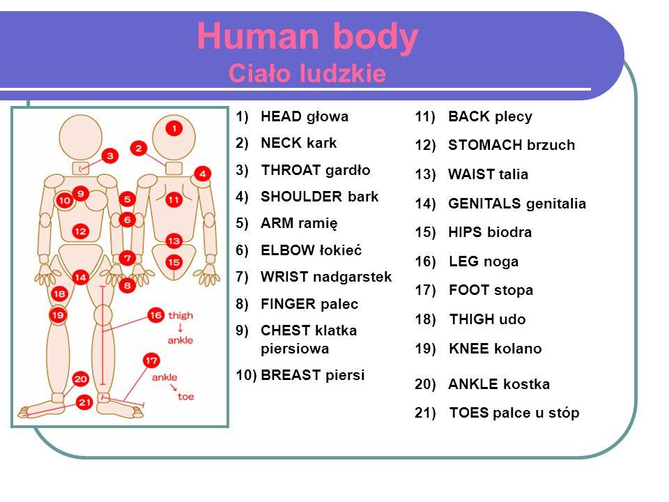 Human body Ciało ludzkie 1)HEAD głowa 2)NECK kark 3)THROAT gardło 4)SHOULDER bark 5)ARM ramię 6)ELBOW łokieć 7)WRIST nadgarstek 8)FINGER palec 9)CHEST
