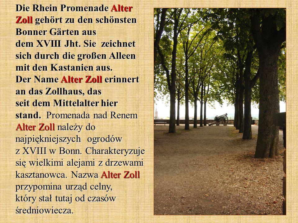 Die Rhein Promenade Alter Zoll gehört zu den schönsten Bonner Gärten aus dem XVIII Jht. Sie zeichnet sich durch die großen Alleen mit den Kastanien au