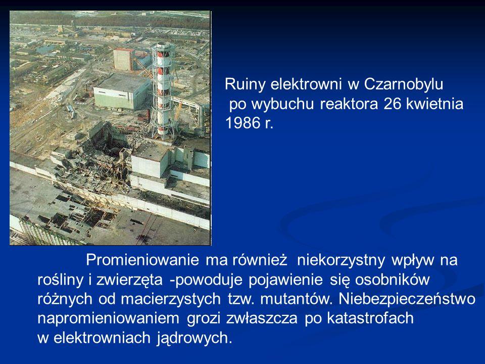 Ruiny elektrowni w Czarnobylu po wybuchu reaktora 26 kwietnia 1986 r. Promieniowanie ma również niekorzystny wpływ na rośliny i zwierzęta -powoduje po