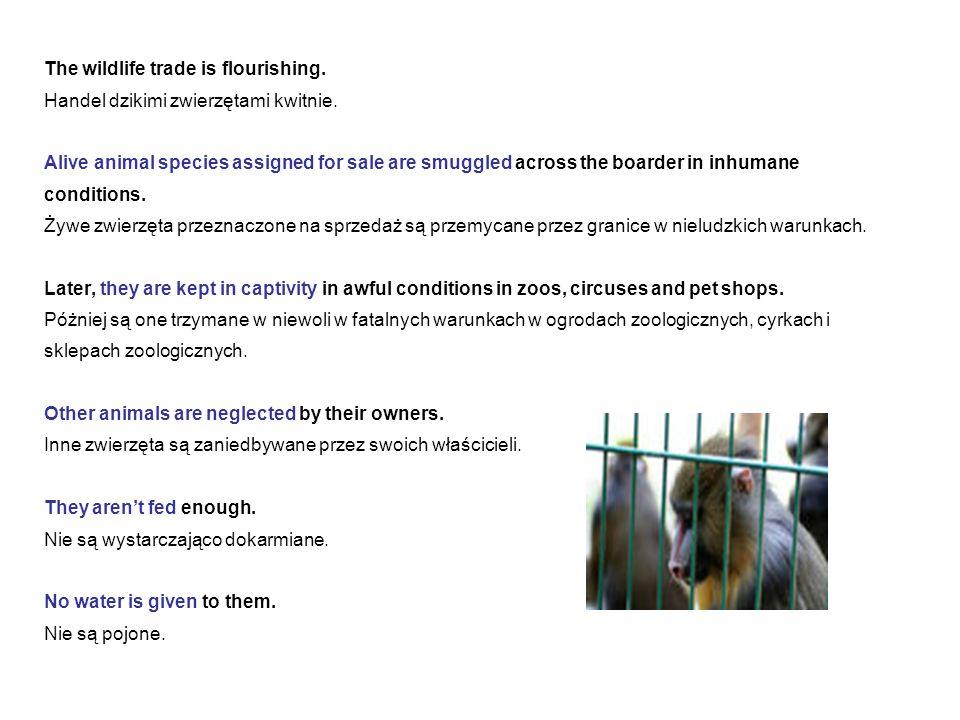 The wildlife trade is flourishing.Handel dzikimi zwierzętami kwitnie.