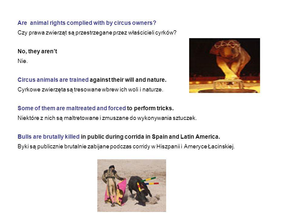 Are animal rights complied with by circus owners? Czy prawa zwierząt są przestrzegane przez właścicieli cyrków? No, they arent Nie. Circus animals are