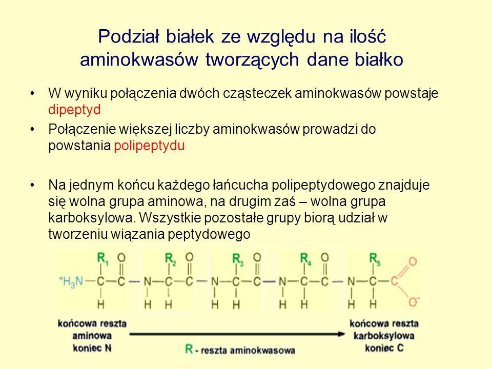 Podział białek ze względu na ilość aminokwasów tworzących dane białko W wyniku połączenia dwóch cząsteczek aminokwasów powstaje dipeptyd Połączenie wi
