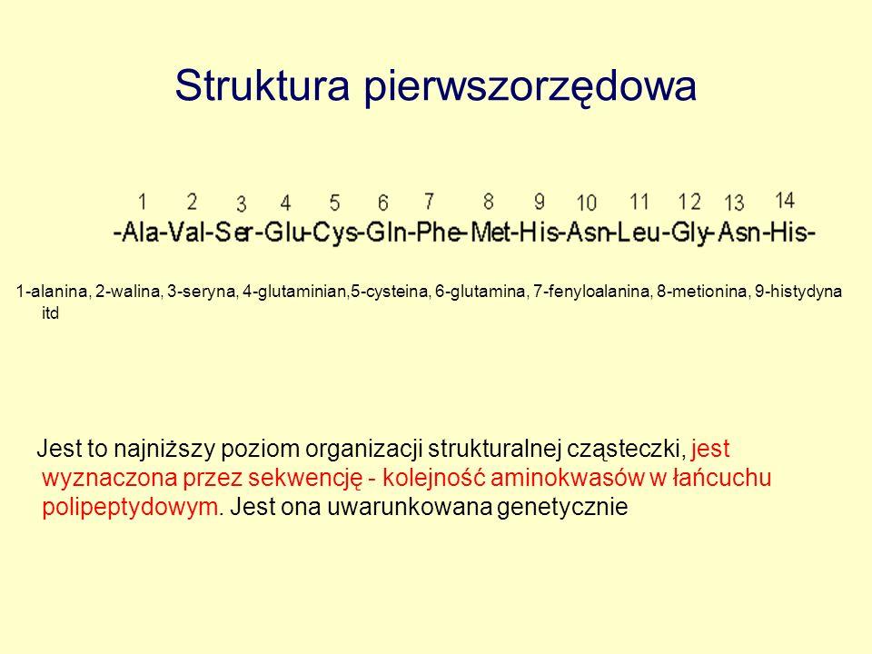 Struktura pierwszorzędowa 1-alanina, 2-walina, 3-seryna, 4-glutaminian,5-cysteina, 6-glutamina, 7-fenyloalanina, 8-metionina, 9-histydyna itd Jest to