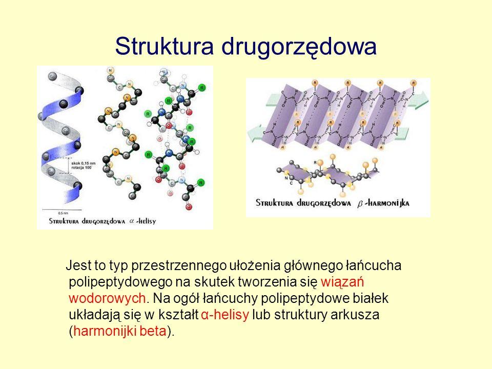 Struktura drugorzędowa Jest to typ przestrzennego ułożenia głównego łańcucha polipeptydowego na skutek tworzenia się wiązań wodorowych. Na ogół łańcuc