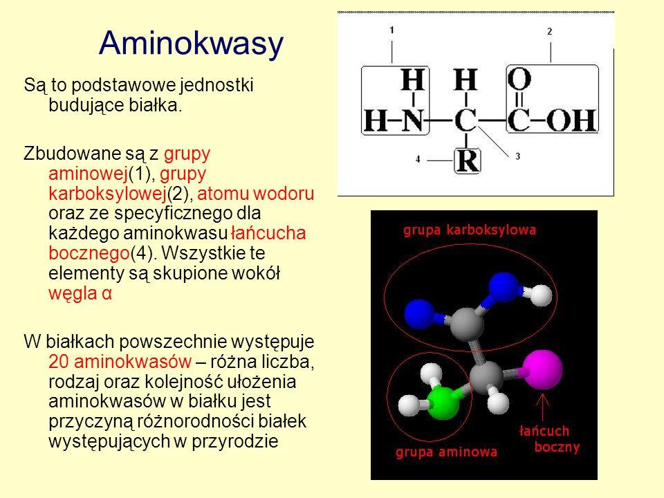Aminokwasy Są to podstawowe jednostki budujące białka. Zbudowane są z grupy aminowej(1), grupy karboksylowej(2), atomu wodoru oraz ze specyficznego dl