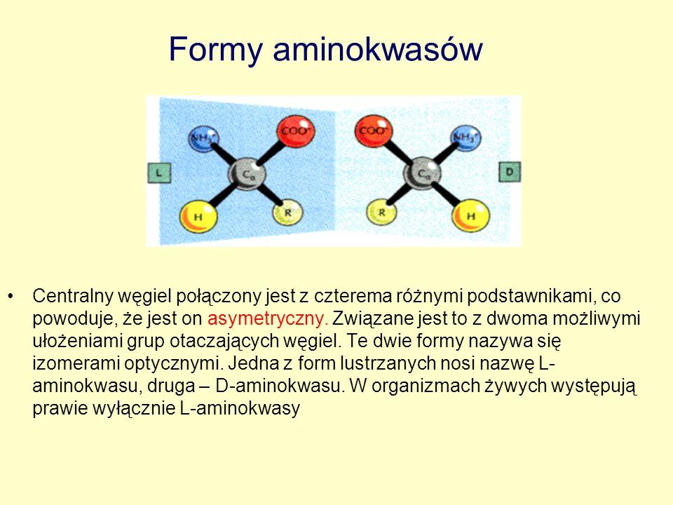 Formy aminokwasów Centralny węgiel połączony jest z czterema różnymi podstawnikami, co powoduje, że jest on asymetryczny. Związane jest to z dwoma moż