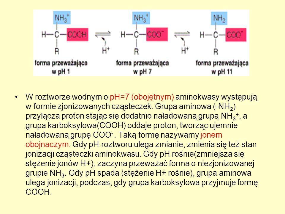 W roztworze wodnym o pH=7 (obojętnym) aminokwasy występują w formie zjonizowanych cząsteczek. Grupa aminowa (-NH 2 ) przyłącza proton stając się dodat