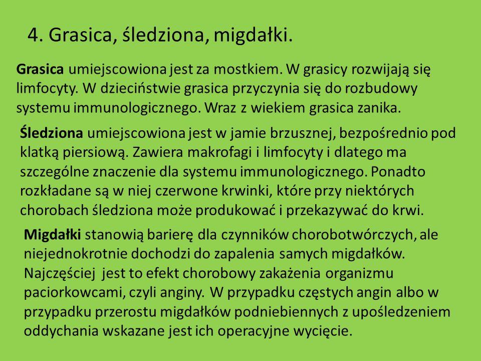 4. Grasica, śledziona, migdałki. Grasica umiejscowiona jest za mostkiem. W grasicy rozwijają się limfocyty. W dzieciństwie grasica przyczynia się do r