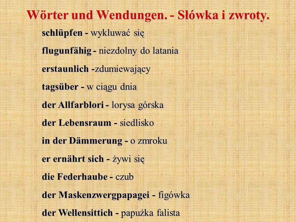 schlüpfen - wykluwać się flugunfähig - niezdolny do latania erstaunlich -zdumiewający tagsüber - w ciągu dnia der Allfarblori - lorysa górska der Lebensraum - siedlisko in der Dämmerung - o zmroku er ernährt sich - żywi się die Federhaube - czub der Maskenzwergpapagei - figówka der Wellensittich - papużka falista Wörter und Wendungen.
