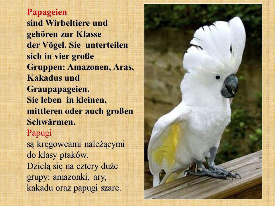 Papageien sind Wirbeltiere und gehören zur Klasse der Vögel.