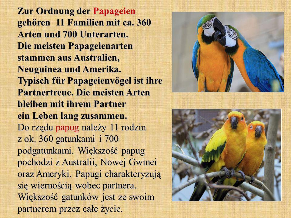 Zur Ordnung der Papageien gehören 11 Familien mit ca.