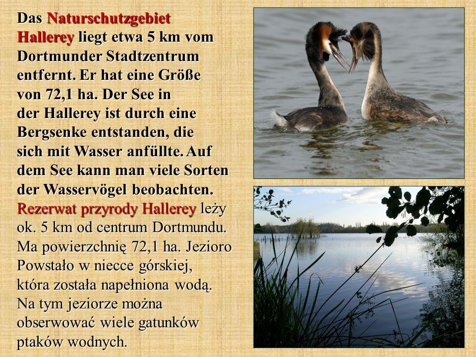 Das Naturschutzgebiet Hallerey liegt etwa 5 km vom Dortmunder Stadtzentrum entfernt. Er hat eine Größe von 72,1 ha. Der See in der Hallerey ist durch