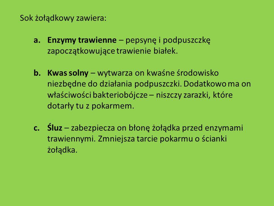 Sok żołądkowy zawiera: a.Enzymy trawienne – pepsynę i podpuszczkę zapoczątkowujące trawienie białek. b.Kwas solny – wytwarza on kwaśne środowisko niez