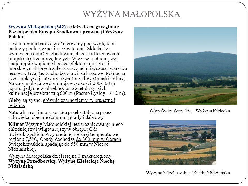 WYŻYNA MAŁOPOLSKA Wyżyna Małopolska (342) należy do megaregionu: Pozaalpejska Europa Środkowa i prowincji Wyżyny Polskie Jest to region bardzo zróżnic