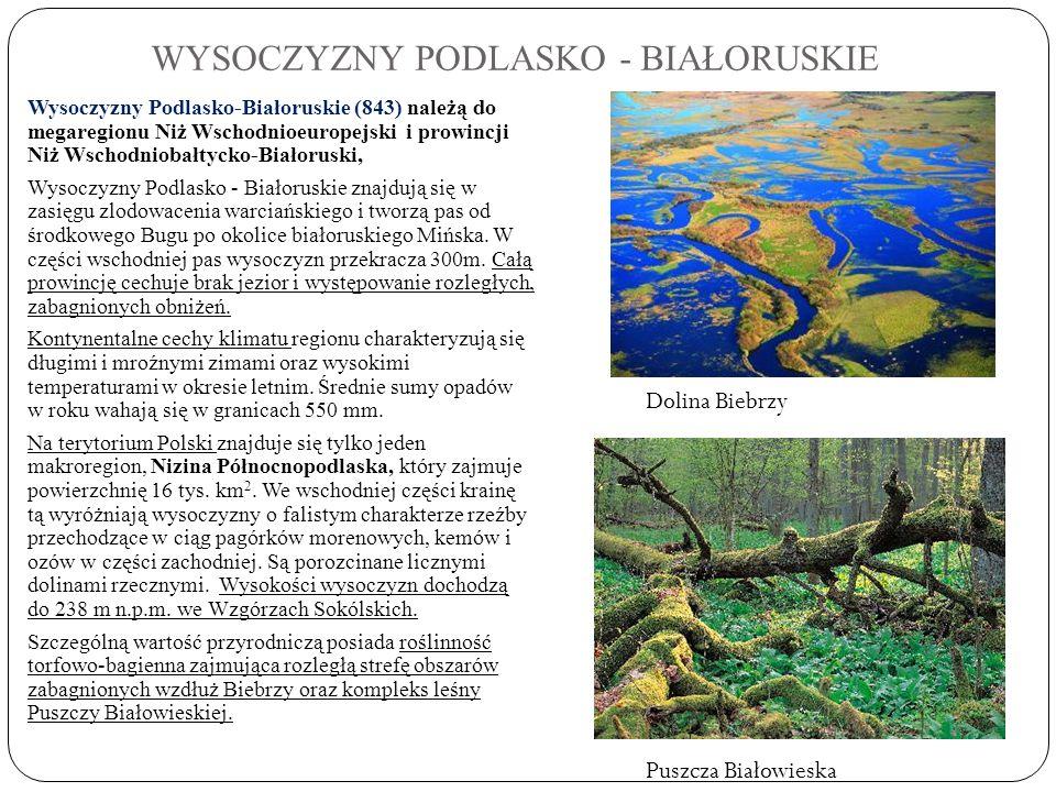 WYSOCZYZNY PODLASKO - BIAŁORUSKIE Wysoczyzny Podlasko-Białoruskie (843) należą do megaregionu Niż Wschodnioeuropejski i prowincji Niż Wschodniobałtyck