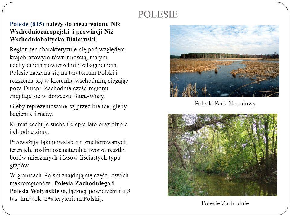 POLESIE Polesie (845) należy do megaregionu Niż Wschodnioeuropejski i prowincji Niż Wschodniobałtycko-Białoruski, Region ten charakteryzuje się pod wz