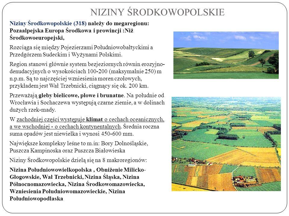 NIZINY ŚRODKOWOPOLSKIE Niziny Środkowopolskie (318) należy do megaregionu: Pozaalpejska Europa Środkowa i prowincji :Niż Środkowoeuropejski, Rozciąga