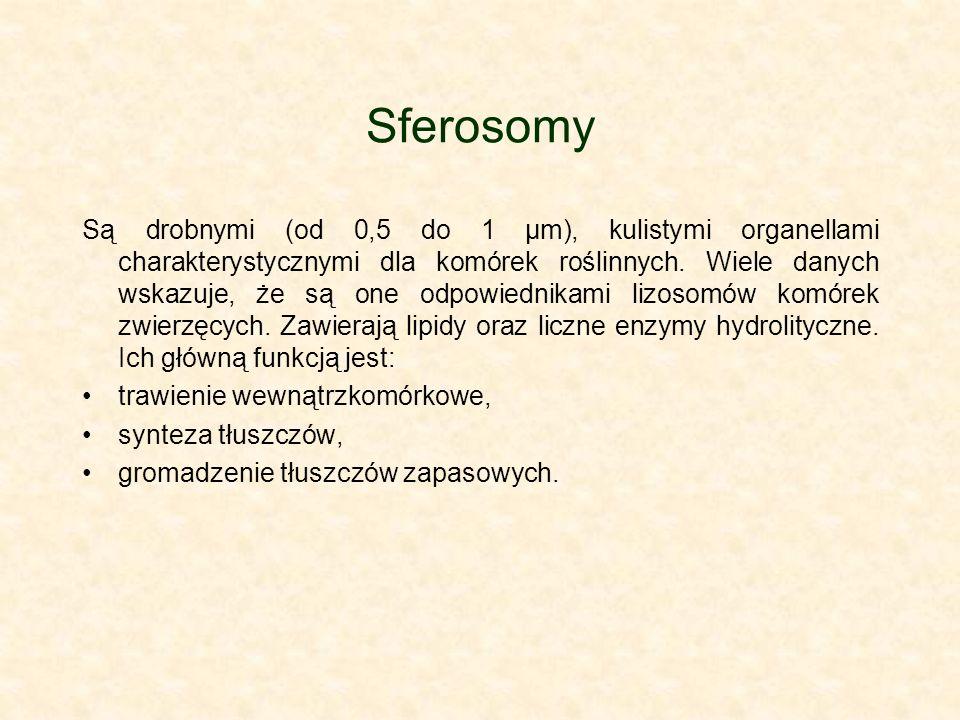 Sferosomy Są drobnymi (od 0,5 do 1 μm), kulistymi organellami charakterystycznymi dla komórek roślinnych.