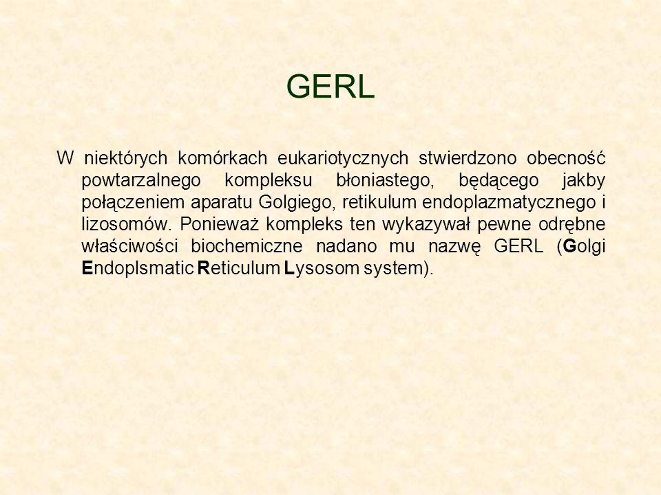 GERL W niektórych komórkach eukariotycznych stwierdzono obecność powtarzalnego kompleksu błoniastego, będącego jakby połączeniem aparatu Golgiego, retikulum endoplazmatycznego i lizosomów.
