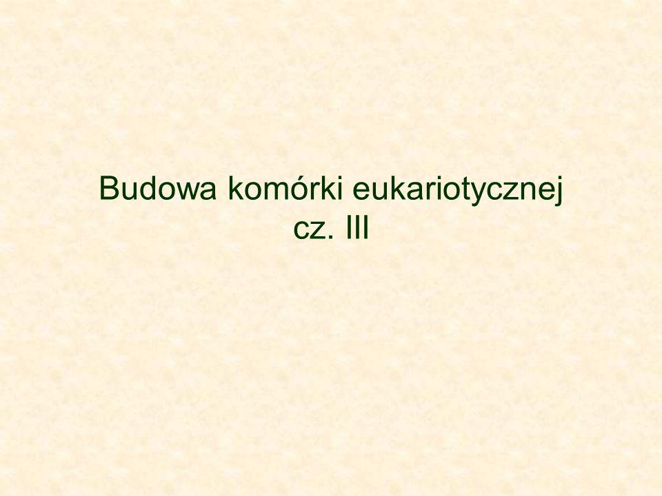 Budowa komórki eukariotycznej cz. III