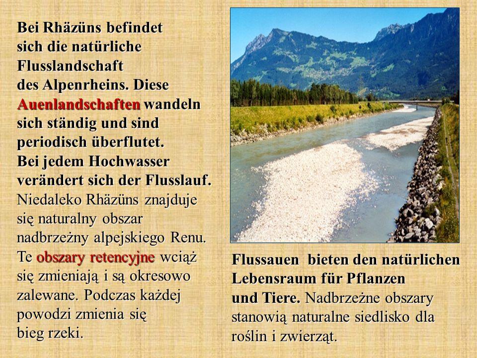 Bei Rhäzüns befindet sich die natürliche Flusslandschaft des Alpenrheins. Diese Auenlandschaften wandeln sich ständig und sind periodisch überflutet.
