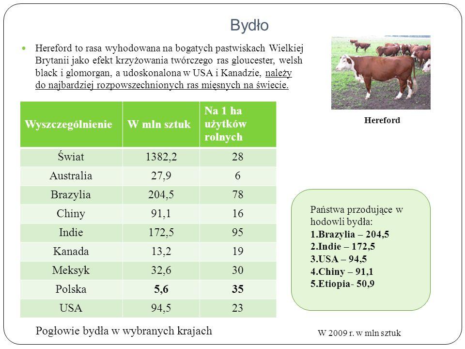 Obszary hodowli bydła na świecie Obszary hodowli Centra hodowli