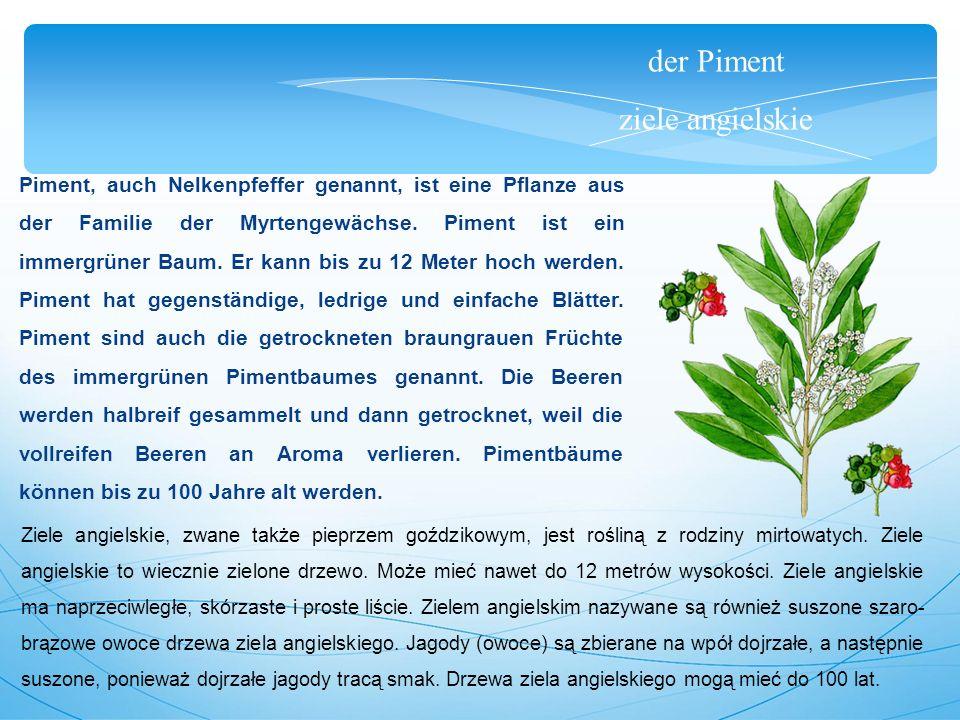 der Piment ziele angielskie Piment, auch Nelkenpfeffer genannt, ist eine Pflanze aus der Familie der Myrtengewächse.