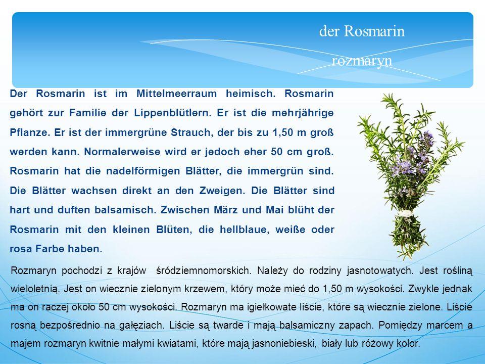 der Rosmarin rozmaryn Der Rosmarin ist im Mittelmeerraum heimisch.
