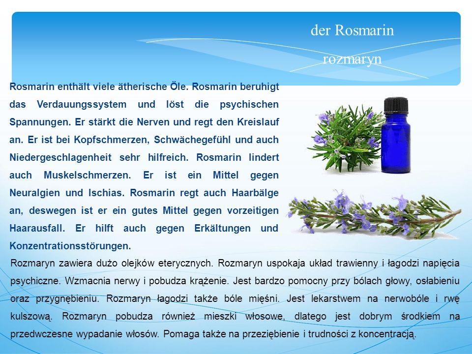 der Rosmarin rozmaryn Rosmarin enthält viele ätherische Öle.