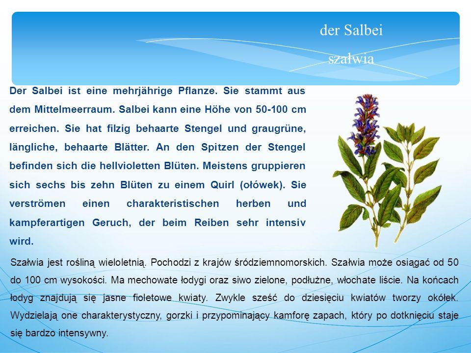der Salbei szałwia Der Salbei ist eine mehrjährige Pflanze.