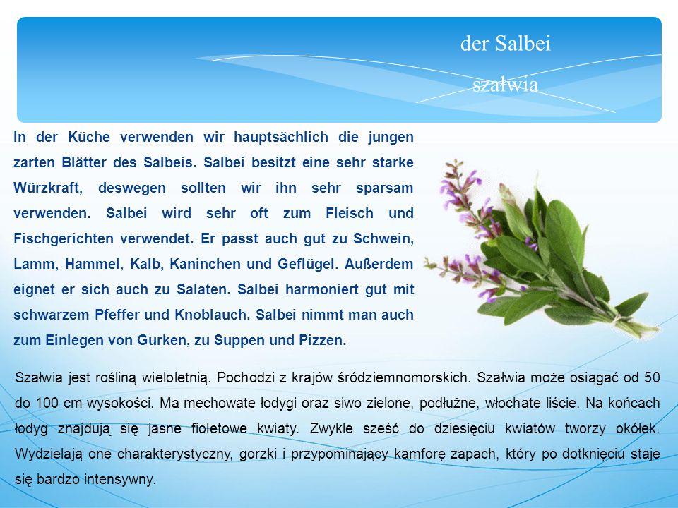 der Salbei szałwia In der Küche verwenden wir hauptsächlich die jungen zarten Blätter des Salbeis.